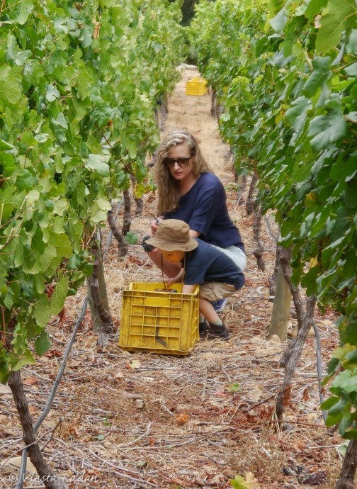 GrapePicking_STIAS_Stellenbosch_2019_s32